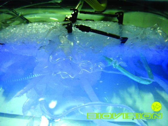 I. számú fölösleges kísérlet – Biovision (2005, üvegedény, UV fénycső, mozgásérzékelő, mdf, szilikon, elektromos alkatrészek, monitor, DVD loop, vezetékek, pvc csövek, változó méret)